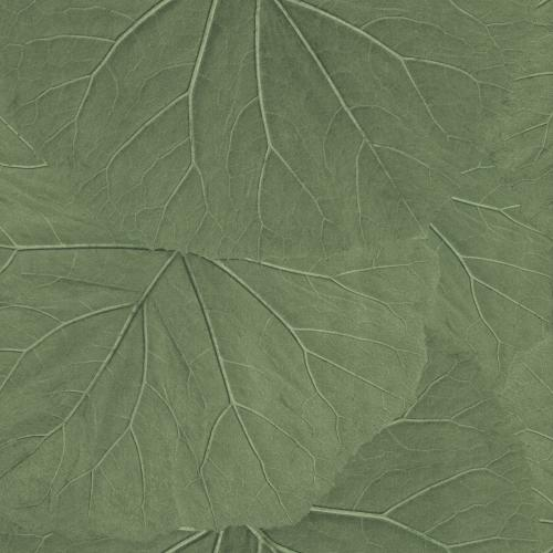 Tapete Rasch Textil, Jungle Fever, 138995